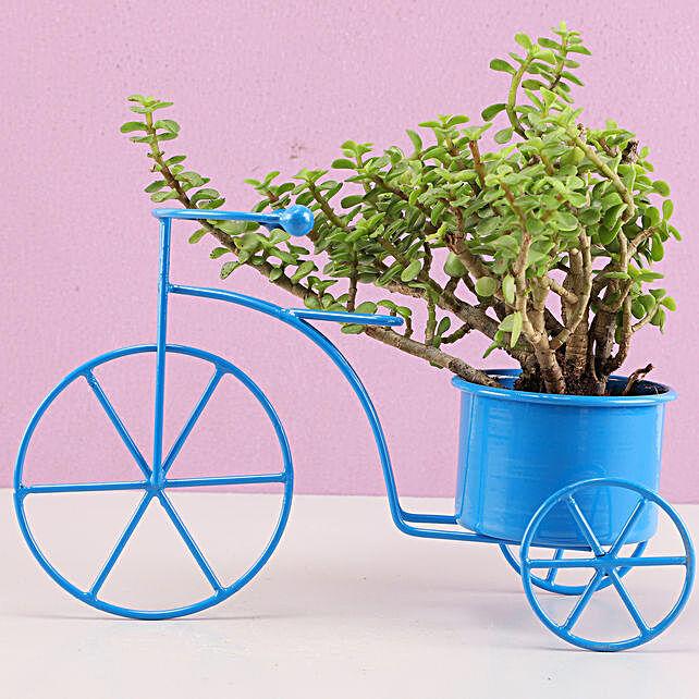 lucky plant with unique shape planter