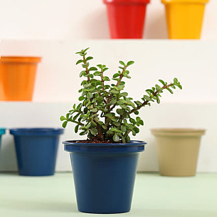 Indoor Plant for Home Online:Metal Planters