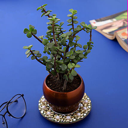 Jade Plant In Brass Pot And Beautiful Mirror Plate