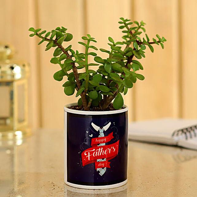 Jade Plant In Ceramic Pot For Dad