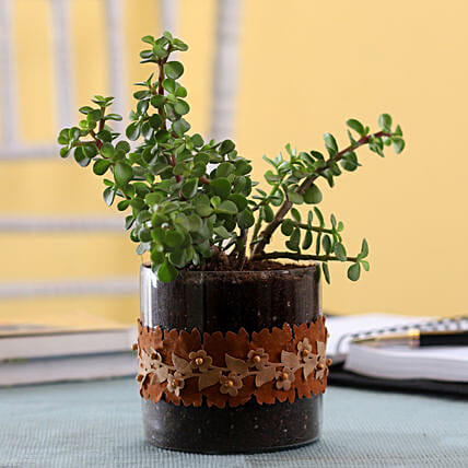 Plant with Lace Decorated Planter:Glass Planters