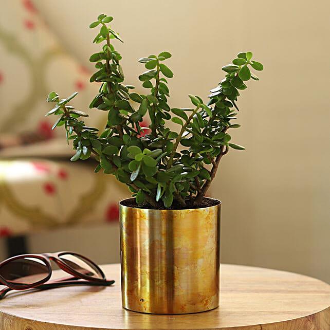 online home decor plants