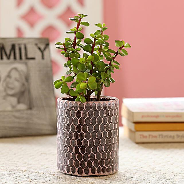 Decorative Pot Plant Online