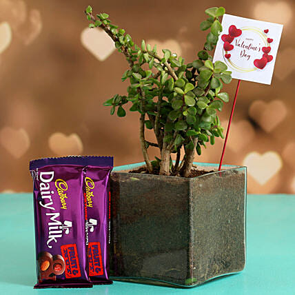 Jade Plant In Glass Vase With V-Day Tag & Cadbury Fruit N Nut Hand Delivery