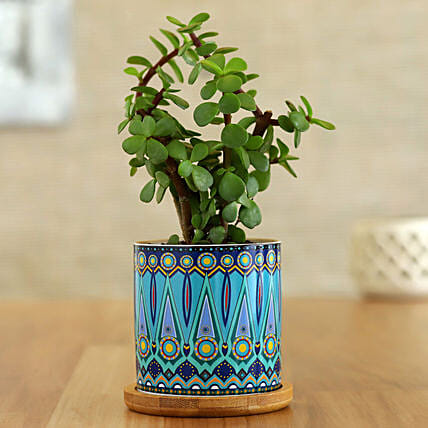 Jade Plant In Green Rangoli Pot With Wooden Plate