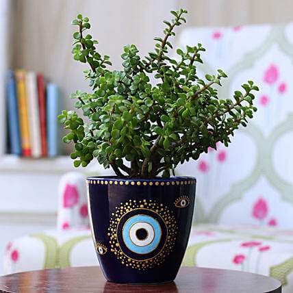 Jade Plant in Hand painted Evil Eye Planter