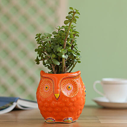 jade plant with handpainted owl planter