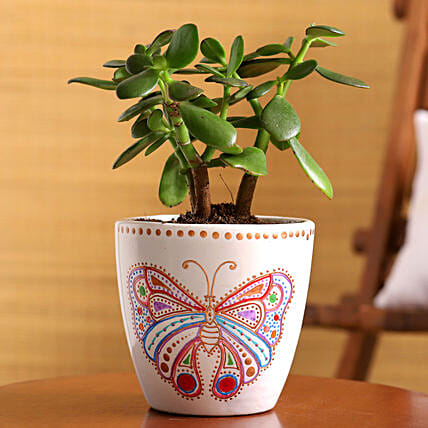 Jade Plant In Handpainted Butterfly planters
