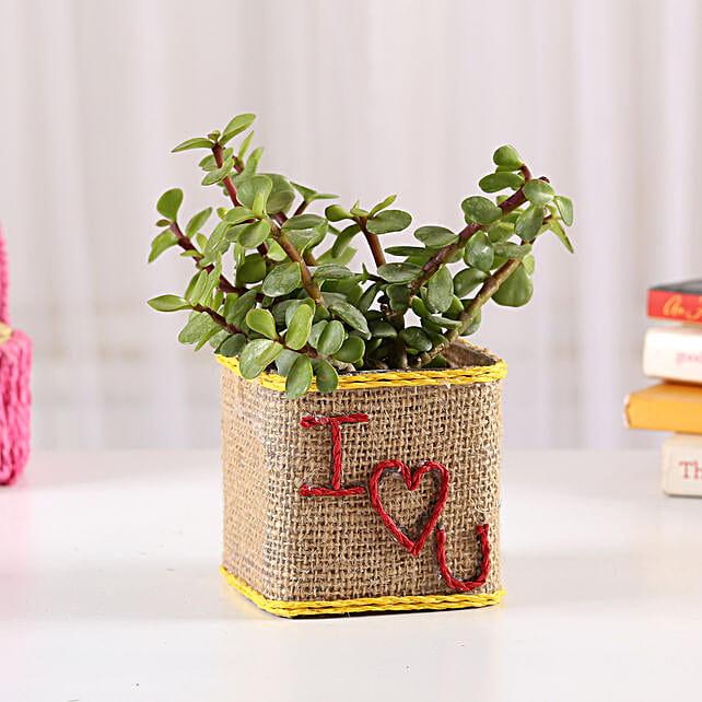 Love Plant in Love Vase for Valentine's day