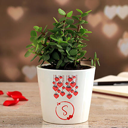 Jade Plant In Personalised Ceramic Vase