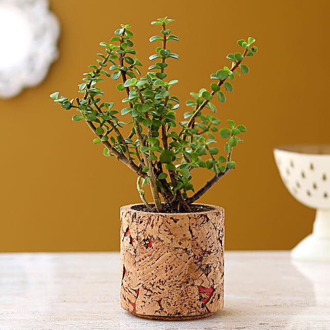 Jade Plant In Pipe Shape Cork Pot