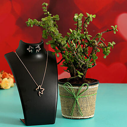 Jade Plant In Plastic Pot & Jewellery Set Hand Delivery