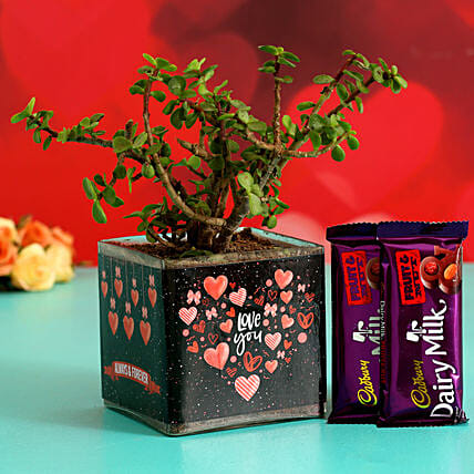 Jade Plant In Sticker Vase With Cadbury Dairy Milk Hand Delivery