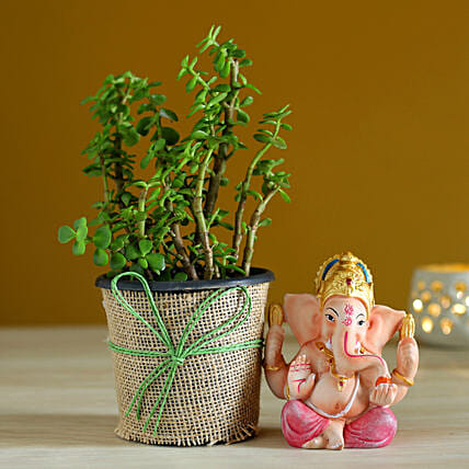 plant for diwali