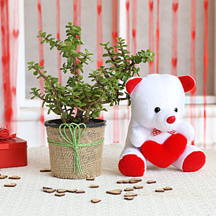 Jade Plant and Teddy Combo  for valentine