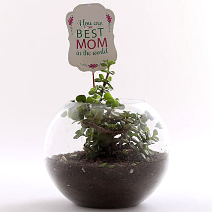 happy mothers day plants online:Plants Delivery