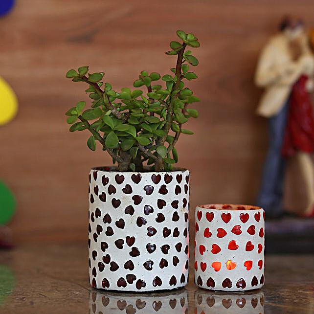 good luck plant with unique planter online