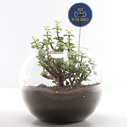 Terrarium Plant Online for Father's Day Gift