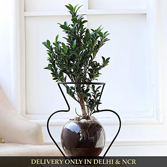 online home décor plant
