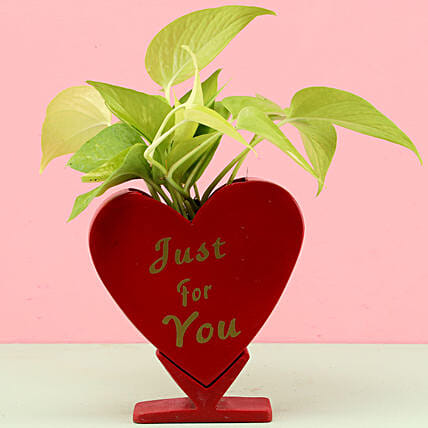 golden money plant with heart shape planter:Fiber Planters
