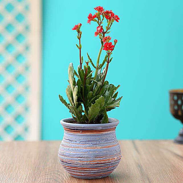 Send Kalanchoe Plant