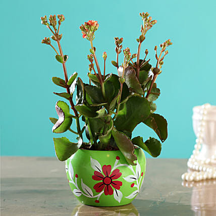 Kalanchoe Plant In Green Hand Painted Pot:Flowering Plants