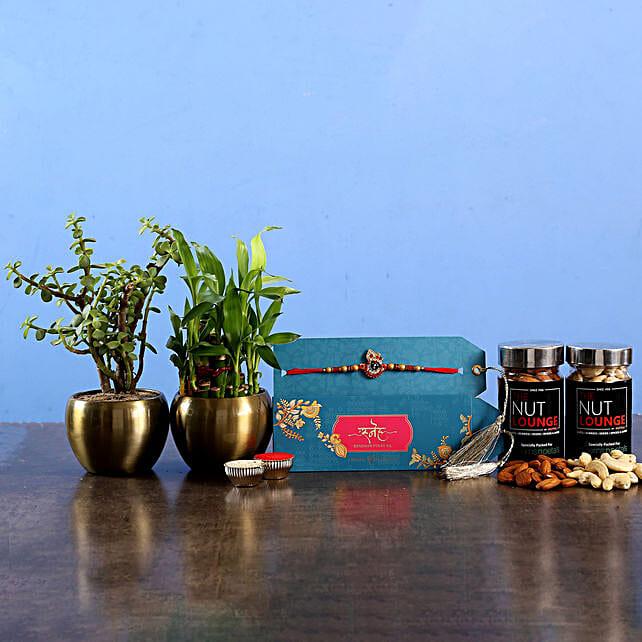 Krishna Rakhi With Refreshing Plants and Dry Fruits