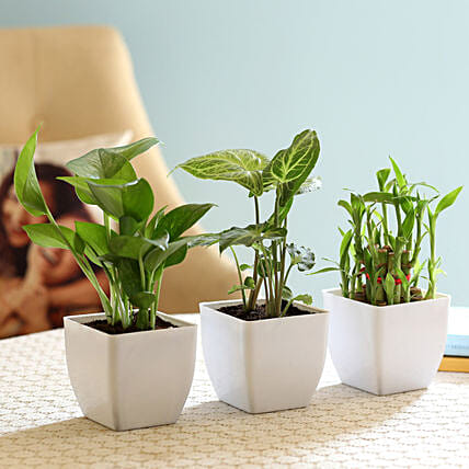 online set of green plants