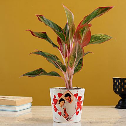 Lipstick Aglaonema Plant In Personalised Pot