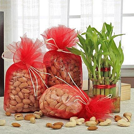 Combo of dry fruits and lucky bamboo:Gifts for Eid Ul Zuha