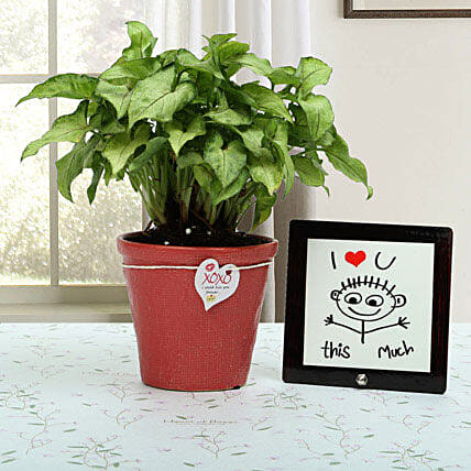 A gift set of i love u table top, a syngonium golden plant in a red resin pot with a xoxo love tag