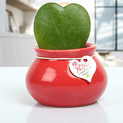 Love plant aka hoya plant in a maroon ceramic matki pot with xoxo love tag