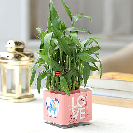 Love Special 2 Layer Bamboo Plant Hand Delivery:Lucky Bamboo Plants