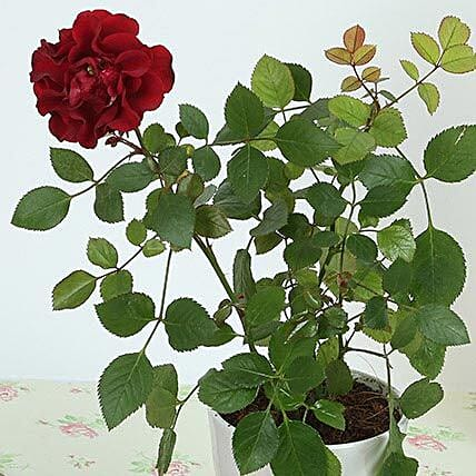 Flowering Plants Gifts