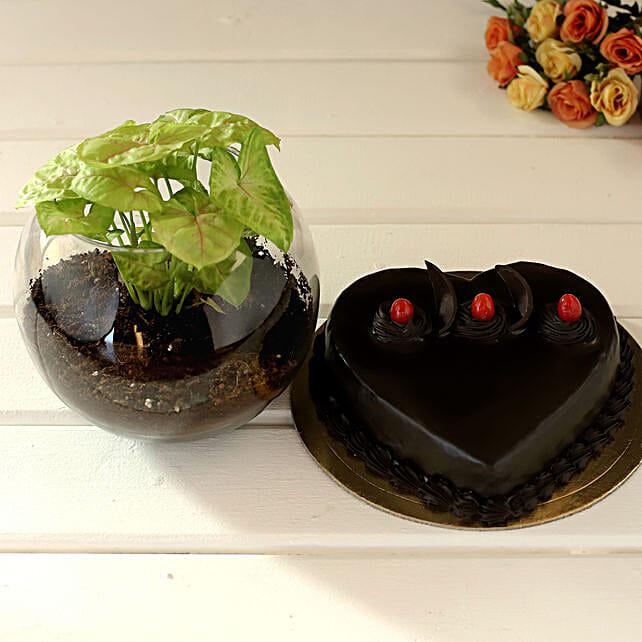 Truffle Cake & Plant Gift for Husband