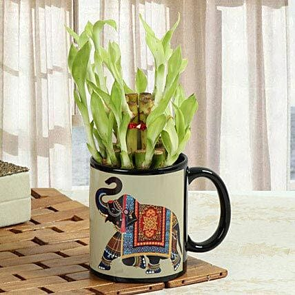 Lucky bamboo in a mug