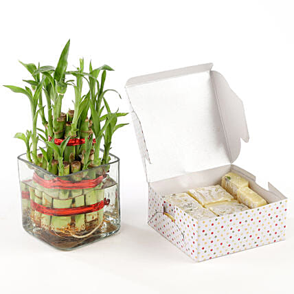 Pista burfi with lucky bamboo:Order Plants n Sweets