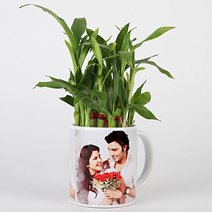 Online Personalised Lucky Bamboo