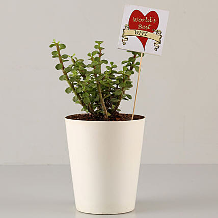 plant for best wife in karwa chauth