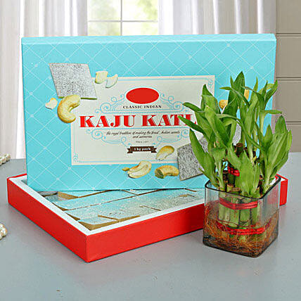 Kaju burfi with lucky bamboo