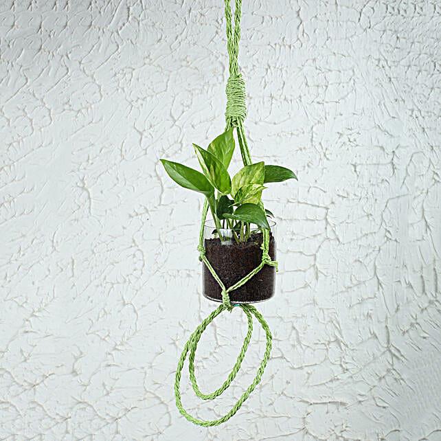 Order Terrariums Plants Online Minature Open Terrariums Plant