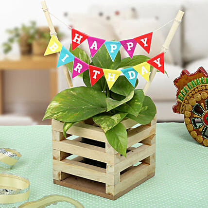 Money plant in a wooden planter pot with a happy birthday banner:Rare Plants