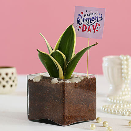 Air Purifying Indoor Plant Online:Womens Day Plants
