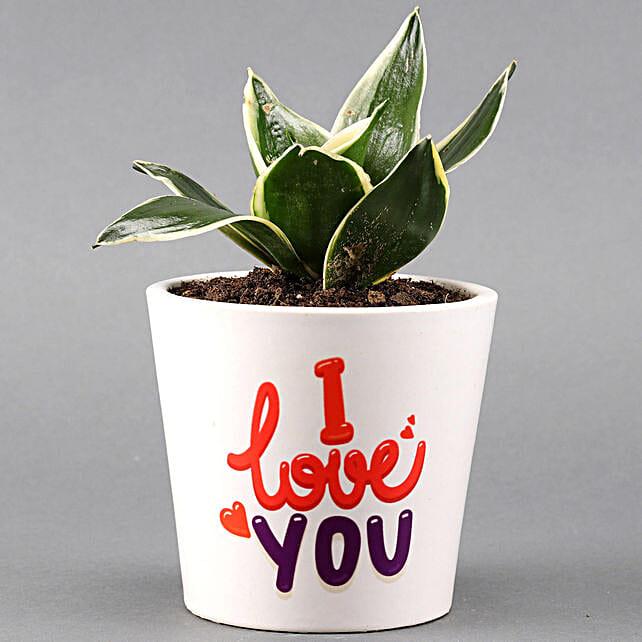 sansevieria plant in customise pot