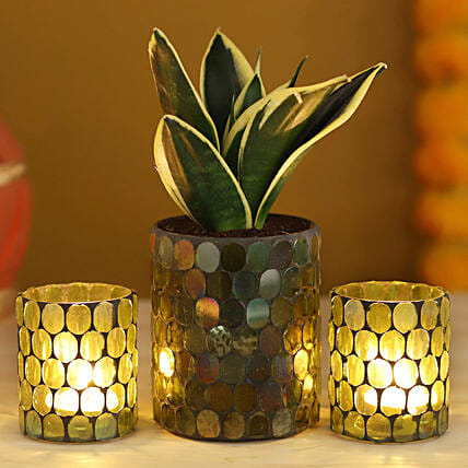 MILT Sansevieria Plant Green Votives Set