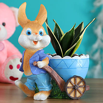 Milt Sansevieria Plant In Blue Shirt Rabbit Cart