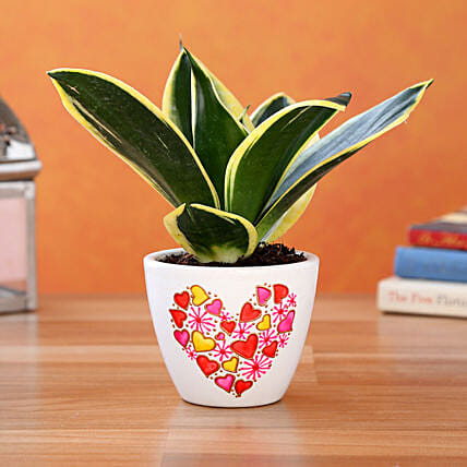 MILT Sansevieria Plant In Cute Heart Planter:Cactus and Succulents Plants