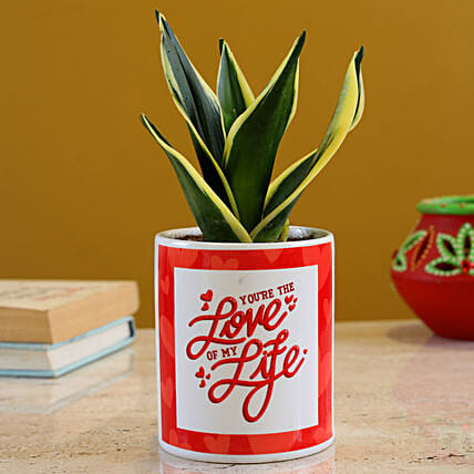 MILT Sansevieria Plant In Love Of My Life Planter