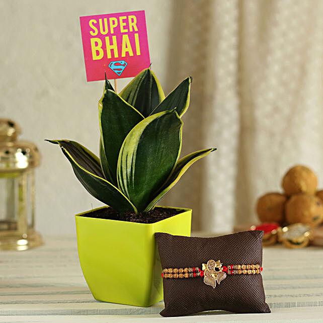 Plant With Rakhi Online