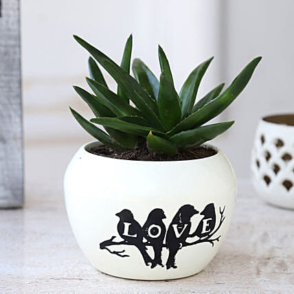 Online Plant In White Metal Pot